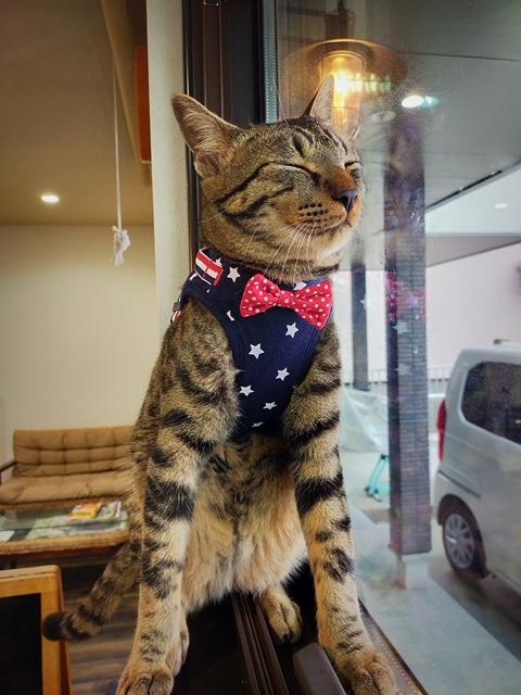 岡山市南区の美容室ラティールの看板ネコ